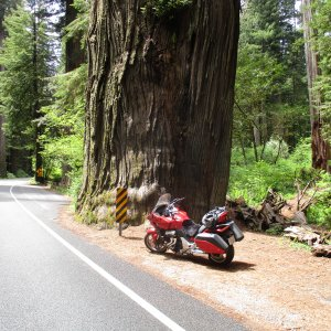 Redwood Forest 12.JPG